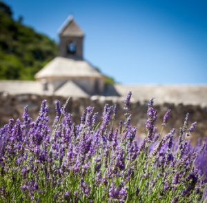 Abbaye de Sénanque with lavender field, Provence, France