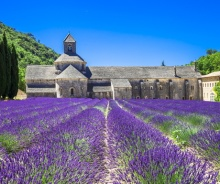 luberon-lavender abbey senanque