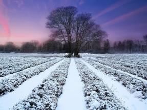 lavender-field-winter-sunset-images-12184